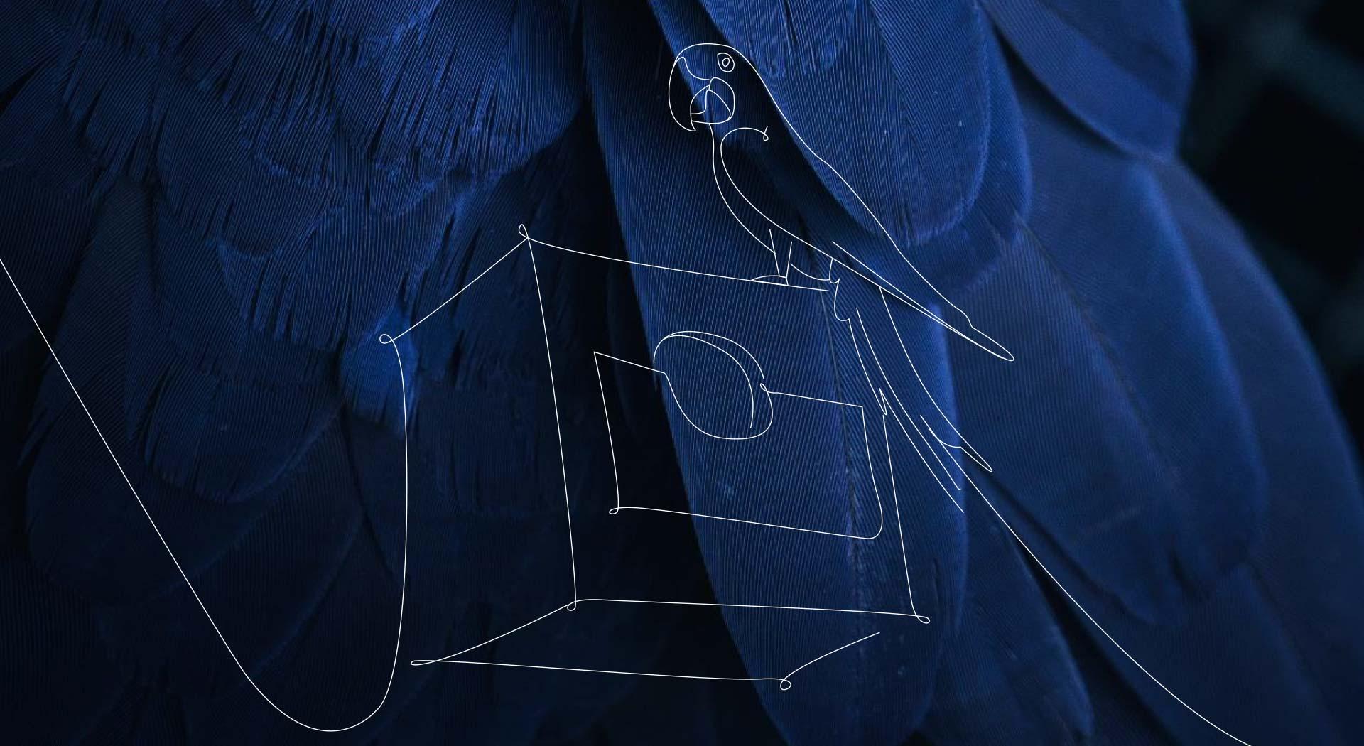 Penas de uma arara na cor azul, por cima das penas um desenho de arara em cima de uma caixa