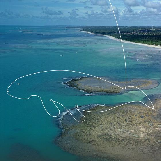 Costa dos corais, um lugar de água azul límpida. Por cima da imagem, um desenho de um animal marinho.