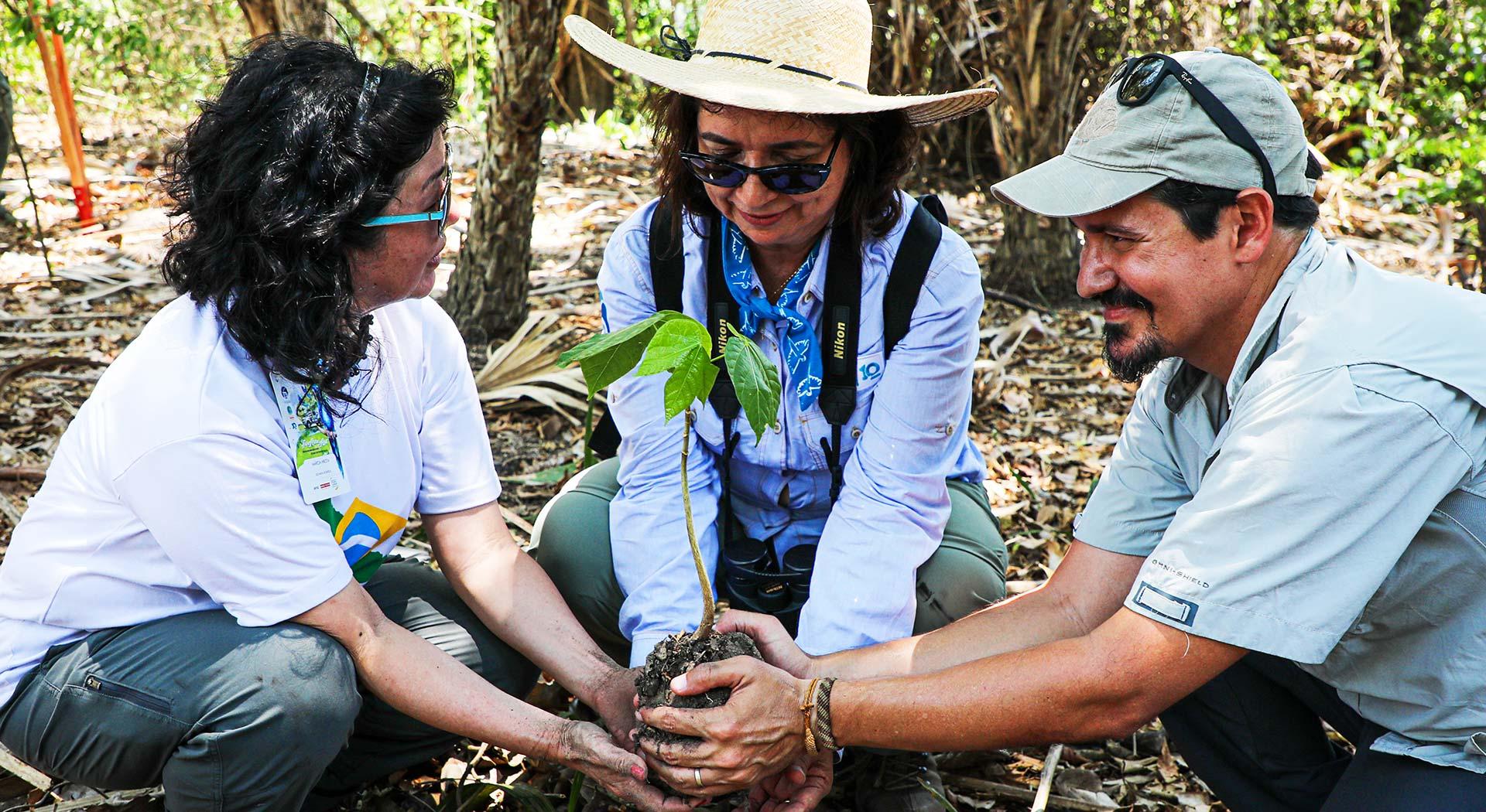 Duas mulheres e um homem plantando uma árvore no solo.