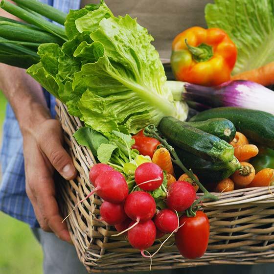 [EN] Homem segurando uma cesta com vegetais