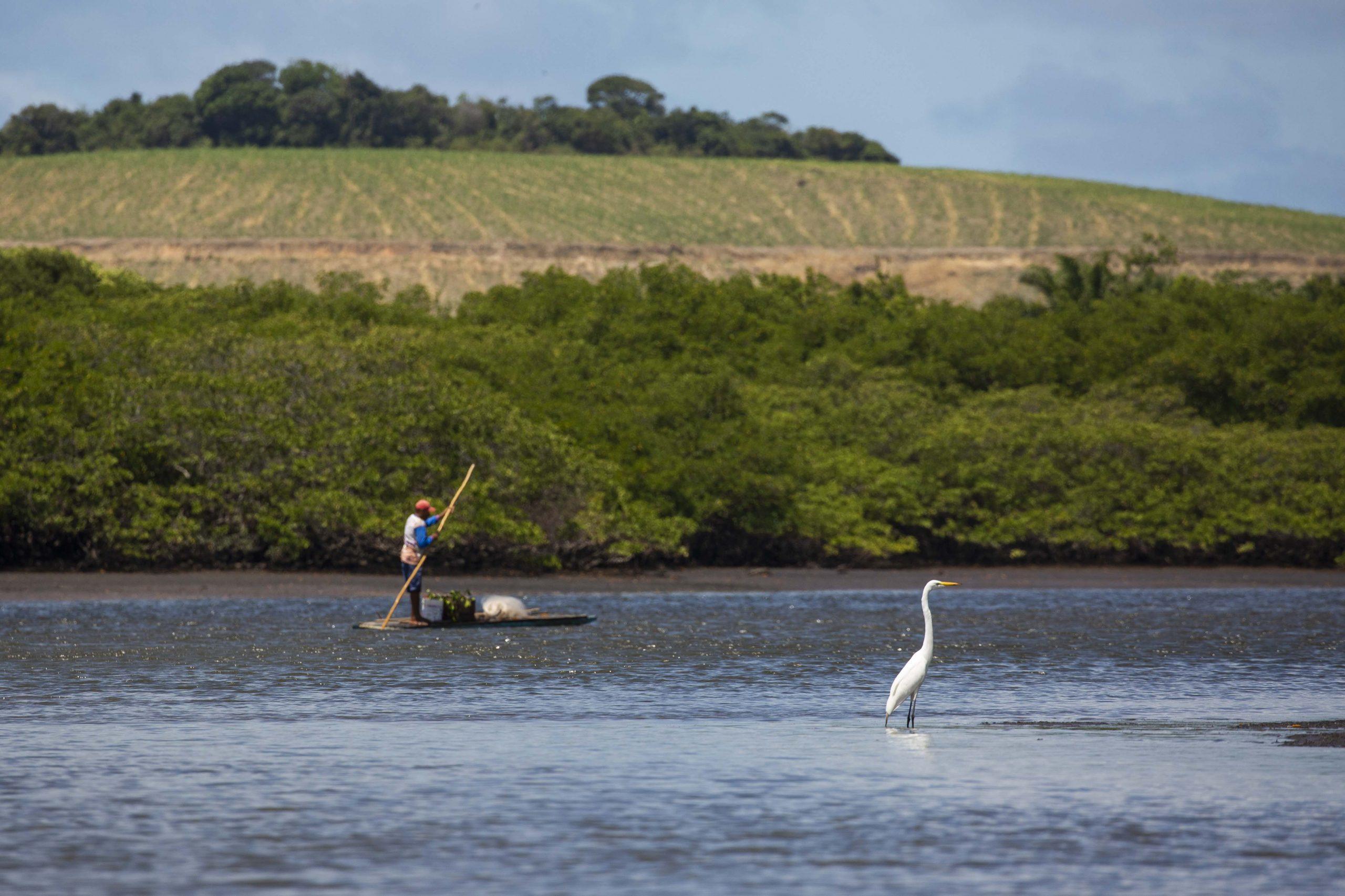 Imagens dos trabalhos de monitoramento de Beatrice Padovani e sua equipe mangue na região do Rio Formoso em Tamandaré, PE